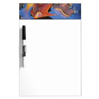 USA, Northeast, Maple Leaf in Reflection Dry-Erase Whiteboards