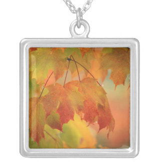 USA, Northeast, Maple Leaves in Rain. Credit as: Square Pendant Necklace