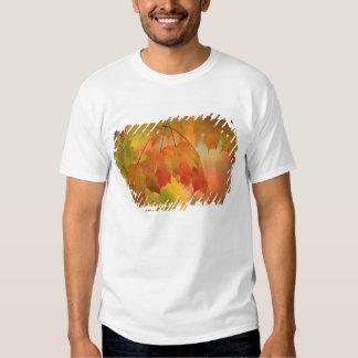 USA, Northeast, Maple Leaves in Rain. Credit as: T-Shirt