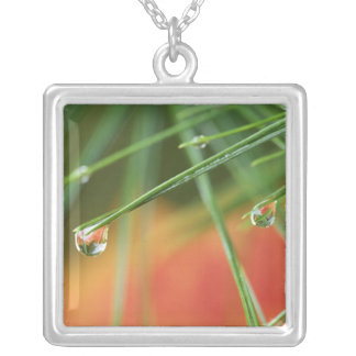 USA, Northeast, Pine tree needles with drops of Square Pendant Necklace