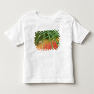 USA, Northeast, Pine tree needles with drops of Toddler T-shirt