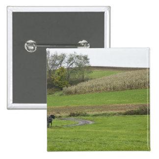 USA, Northeastern Ohio. Amish buggy on farm Button