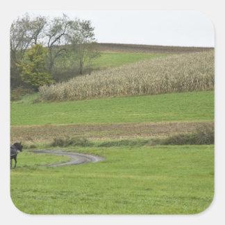 USA, Northeastern Ohio. Amish buggy on farm Square Sticker