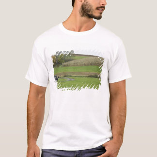 USA, Northeastern Ohio. Amish buggy on farm T-Shirt