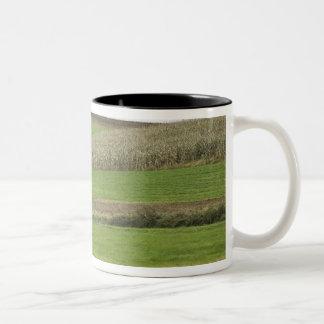 USA, Northeastern Ohio. Amish buggy on farm Two-Tone Coffee Mug