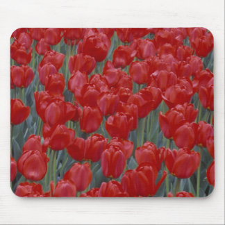 USA, Ohio, Cincinnati. Bed of red tulips Mouse Pad