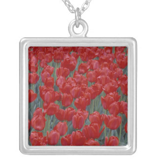 USA, Ohio, Cincinnati. Bed of red tulips Silver Plated Necklace