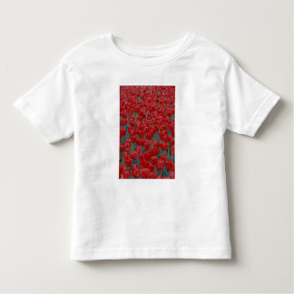 USA, Ohio, Cincinnati. Bed of red tulips Toddler T-shirt