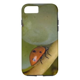 USA, Oregon, Amity. Lady bug on Chardonnay iPhone 8/7 Case
