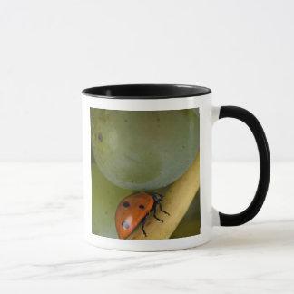 USA, Oregon, Amity. Lady bug on Chardonnay Mug