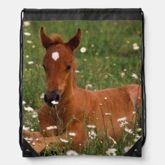 USA, Oregon, Arabian Pony. Drawstring Backpack