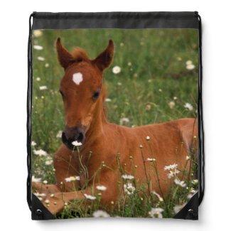 USA, Oregon, Arabian Pony. Drawstring Backpacks