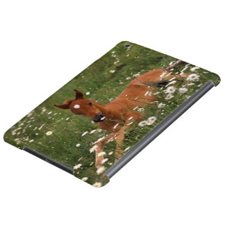 USA, Oregon, Arabian Pony. iPad Air Cover