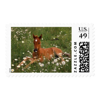 USA, Oregon, Arabian Pony. Stamp