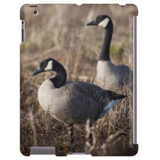 USA, Oregon, Baskett Slough National Wildlife 2