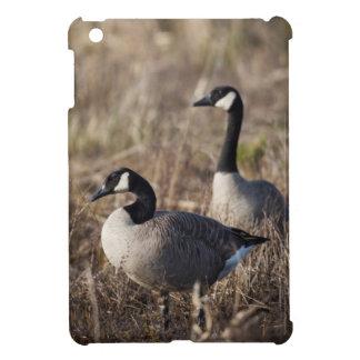 USA, Oregon, Baskett Slough National Wildlife 2 iPad Mini Covers