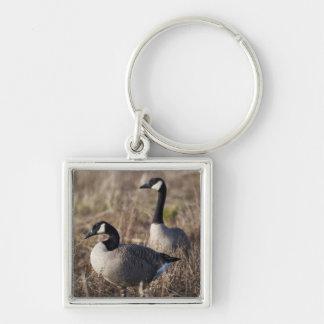 USA, Oregon, Baskett Slough National Wildlife 2 Keychain