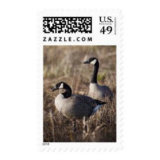 USA, Oregon, Baskett Slough National Wildlife 2 Postage