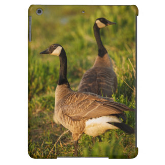 USA, Oregon, Baskett Slough National Wildlife 3 iPad Air Cover