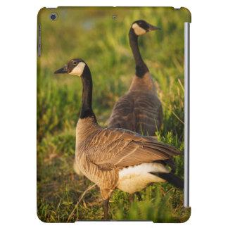 USA, Oregon, Baskett Slough National Wildlife 3 iPad Air Covers