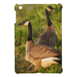 USA, Oregon, Baskett Slough National Wildlife 3 iPad Mini Cover