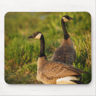 USA, Oregon, Baskett Slough National Wildlife 3 Mouse Pad