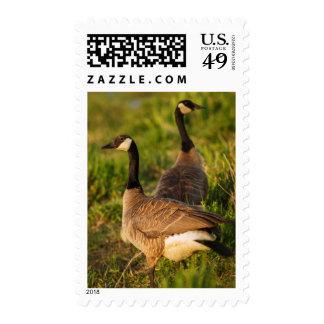 USA, Oregon, Baskett Slough National Wildlife 3 Postage