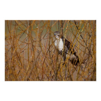 USA, Oregon, Baskett Slough National Wildlife 4 Poster