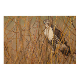 USA, Oregon, Baskett Slough National Wildlife 4 Wood Print