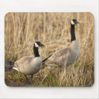 USA, Oregon, Baskett Slough National Wildlife 5 Mouse Pad