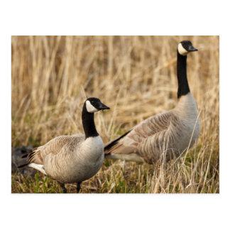 USA, Oregon, Baskett Slough National Wildlife 5 Postcard
