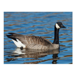 USA, Oregon, Baskett Slough National Wildlife 7 Postcard
