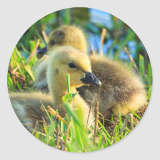 USA, Oregon, Baskett Slough National Wildlife 9 Classic Round Sticker