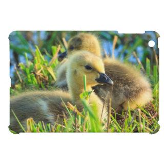 USA, Oregon, Baskett Slough National Wildlife 9 iPad Mini Cover