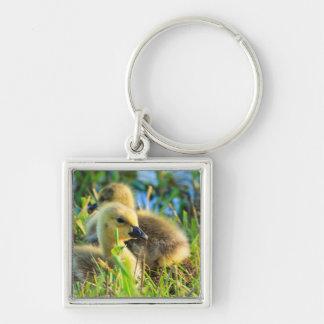 USA, Oregon, Baskett Slough National Wildlife 9 Keychain