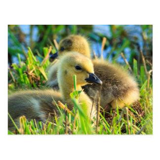 USA, Oregon, Baskett Slough National Wildlife 9 Postcard