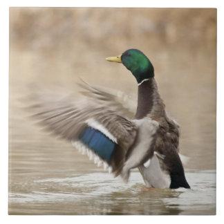 USA, Oregon, Baskett Slough National Wildlife Tiles