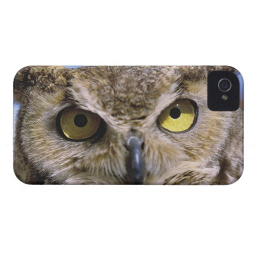 USA, Oregon, Bend. Great Horned Owls are common Blackberry Bold Case