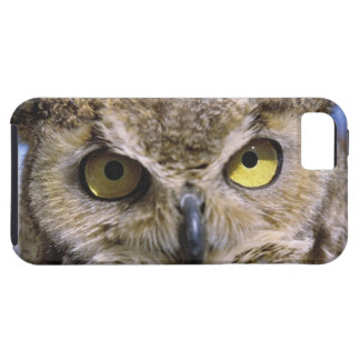 USA, Oregon, Bend. Great Horned Owls are common iPhone SE/5/5s Case