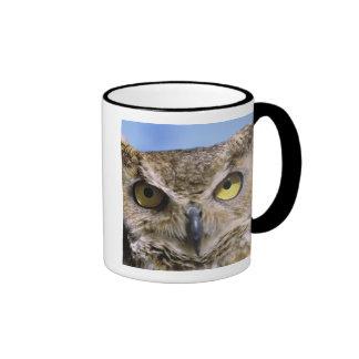 USA, Oregon, Bend. Great Horned Owls are common Coffee Mug