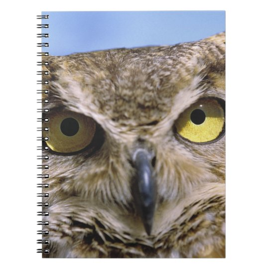 USA, Oregon, Bend. Great Horned Owls are common Notebook