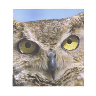 USA, Oregon, Bend. Great Horned Owls are common Notepads