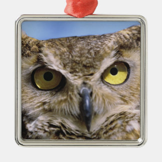 USA, Oregon, Bend. Great Horned Owls are common Christmas Ornament