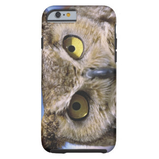USA, Oregon, Bend. Great Horned Owls are common Tough iPhone 6 Case
