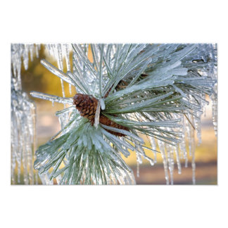 USA, Oregon, Bend. Ponderosa pine needles are Photo Art