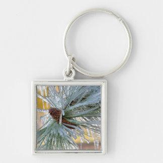 USA, Oregon, Bend. Ponderosa pine needles are Silver-Colored Square Keychain