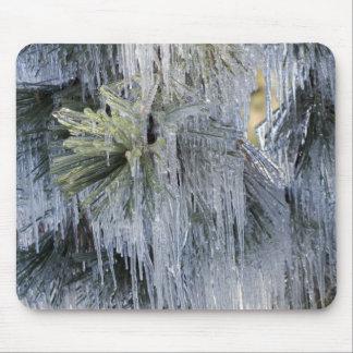 USA, Oregon, Bend. The ice on Ponderosa pine Mousepad