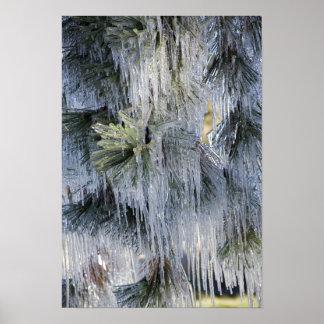 USA, Oregon, Bend. The ice on Ponderosa pine Poster