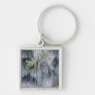 USA, Oregon, Bend. The ice on Ponderosa pine Silver-Colored Square Keychain