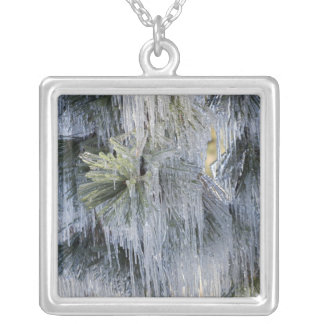 USA, Oregon, Bend. The ice on Ponderosa pine Silver Plated Necklace